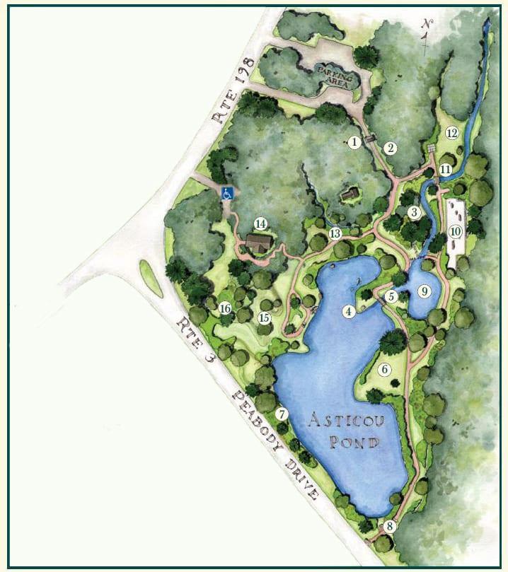 Asticou Azalea Garden Map