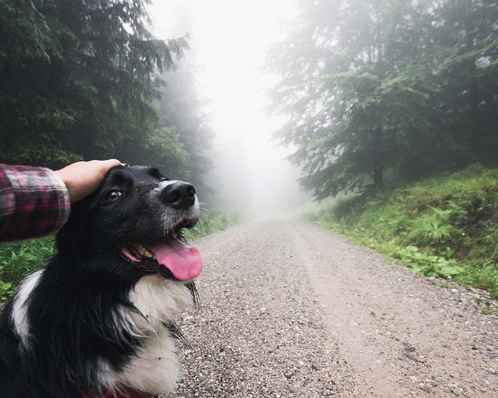 Visit Acadia with Your Dog