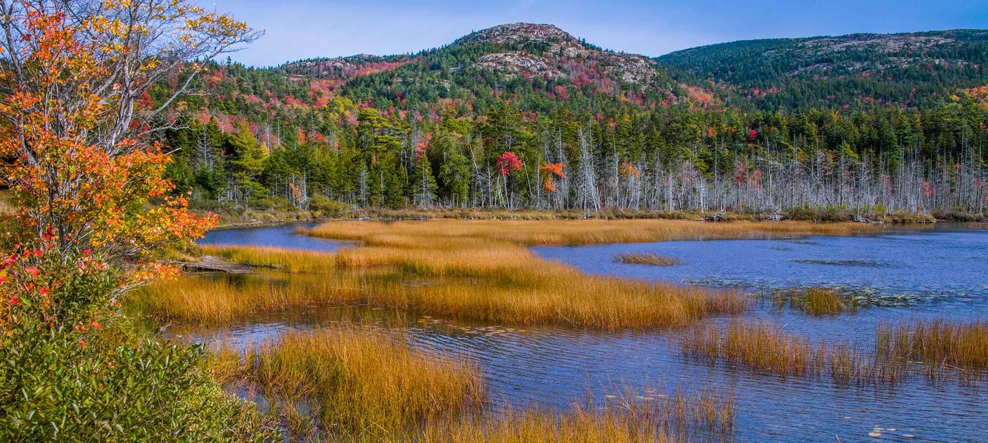Leaf Peeping in Acadia National Park