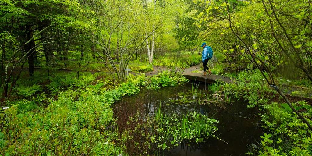Wild Gardens of Acadia