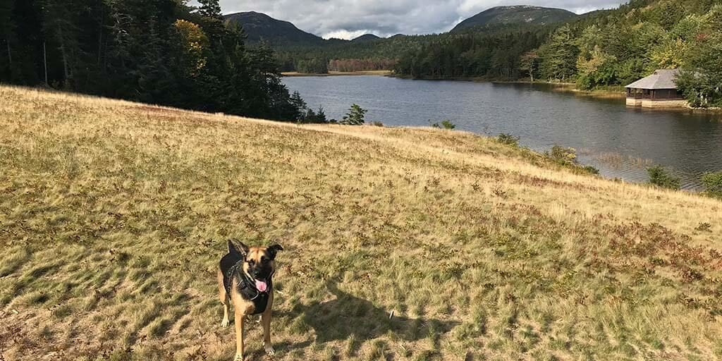 Little Long Pond with Your Dog
